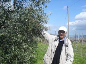 Bruno Amurri mit einem seiner 650 Olivenbäume