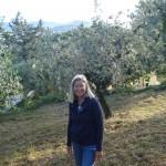 Heidi im gemähten Olivenhain