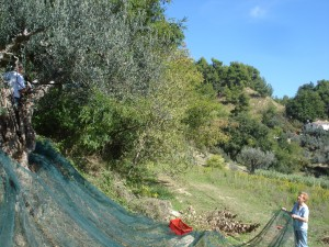 Mama Ursula und Michael mit Olivennetz im steilen Gelände.