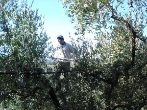Brunos Helfer Romeo mit dem Ernte-Kamm im Baum.