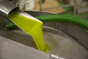 Frisches Olivenöl fließt aus der Presse