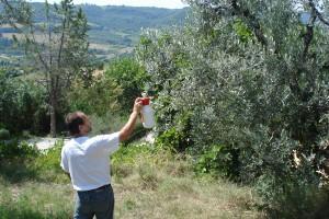Unser Nachbar Tony verteilt das biologische Mittel gegen die Olivenfliege auf jedem unserer Bäume.