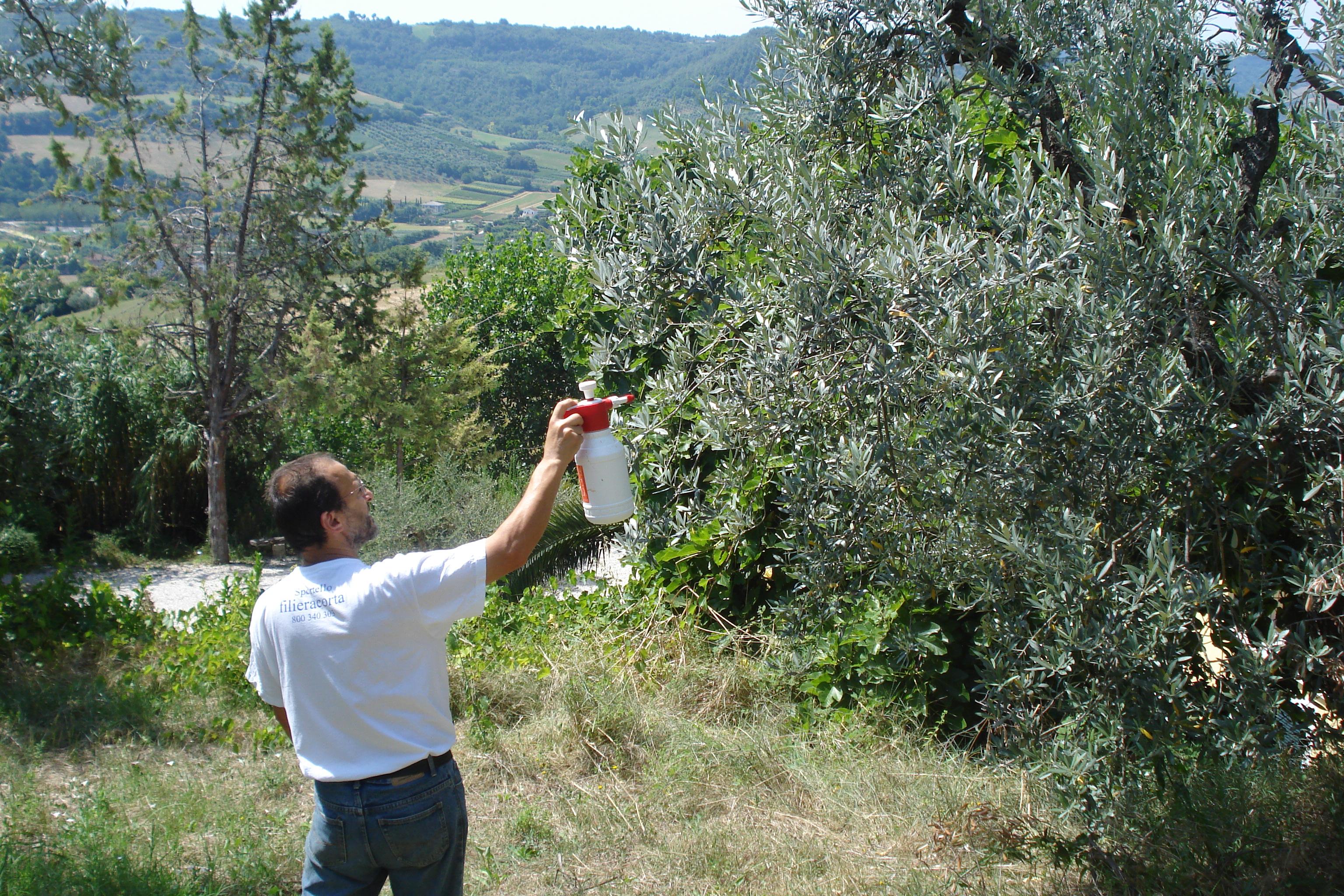 oliven l buch olivenfliegen attacke abgewehrt und stern titelstory ehrliches oliven l aus den. Black Bedroom Furniture Sets. Home Design Ideas