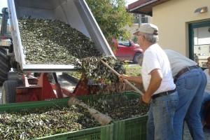 Luigi, Tizianos Vater, lädt die Ernte des Vormittags ab.