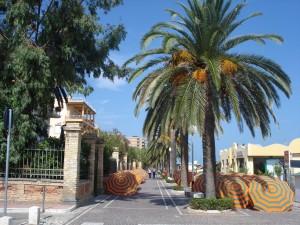 Riviera delle Palme in Grottammare mit intakten Phönixpalmen