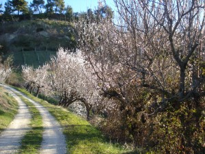 Frühlingshafte Blütenpracht auf dem Weg zu unserem Haus.