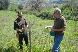 Tiziano, links, begutachtet mit Michael unsere Nachwuchs-Olivenbäume.
