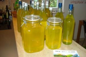 Was für eine knallgelbe Farbe! Limoncello aus unseren eigenen Zitronen ist einfach unsagbar lecker.
