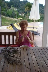 Meine Mama Uschi inspiziert und pflückt die inzwischen getrockneten Olivenblätter.