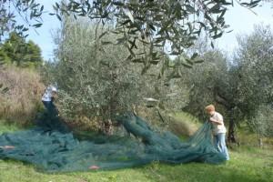 Meine Mama hilft tatkräftig beim Ausbreiten der Netze.