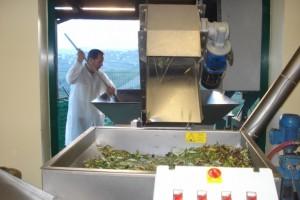 Tiziano bei der Arbeit in seiner Olivenmühle