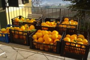 Die Früchte unseres ersten Erntetages - garantiert sonnenverwöhnt und bio