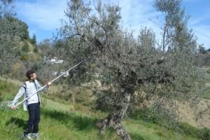 Der 19-jährige Valerio hat den richtigen Baumschnitt gerade gelernt.