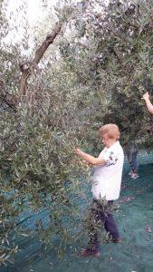 Meine 88-jährige Mama hilft bei der Ernte und wird am 13. November an der Kasse sitzen.