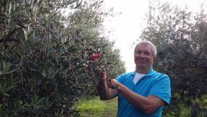Soooo viele schöne Oliven!