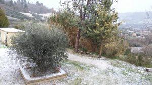 Ausblick aus unserer Casa auf einen leicht eingezuckerten Olivenbaum