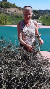 Die Äste mit den getrockneten Olivenblättern werden zur Weiterverarbeitung zerschnitten.
