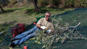 Entspannung am abgesägten Olivenast.
