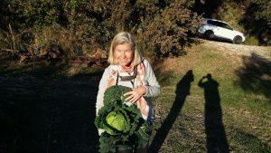 Erntefrisch aus Nachbars Garten: Wirsing von Familie Paci. Grazie!