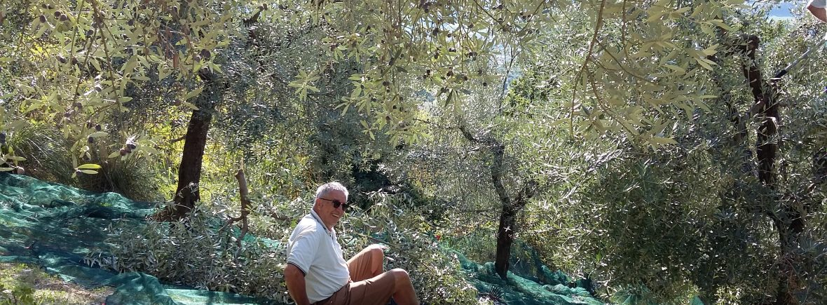 Michael sitzt im Olivennetz