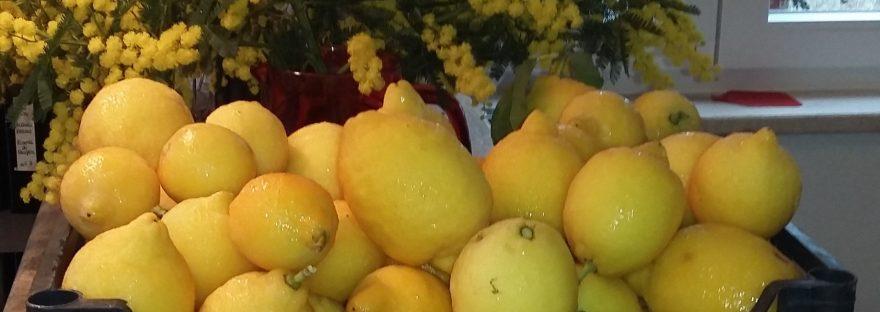 bestes olivenöl stiftung warentest