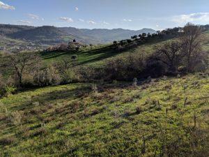 Unsere Zwerge: 40 kleine Olivenbäume, die bald was zu unserer Olivenernte beisteuern