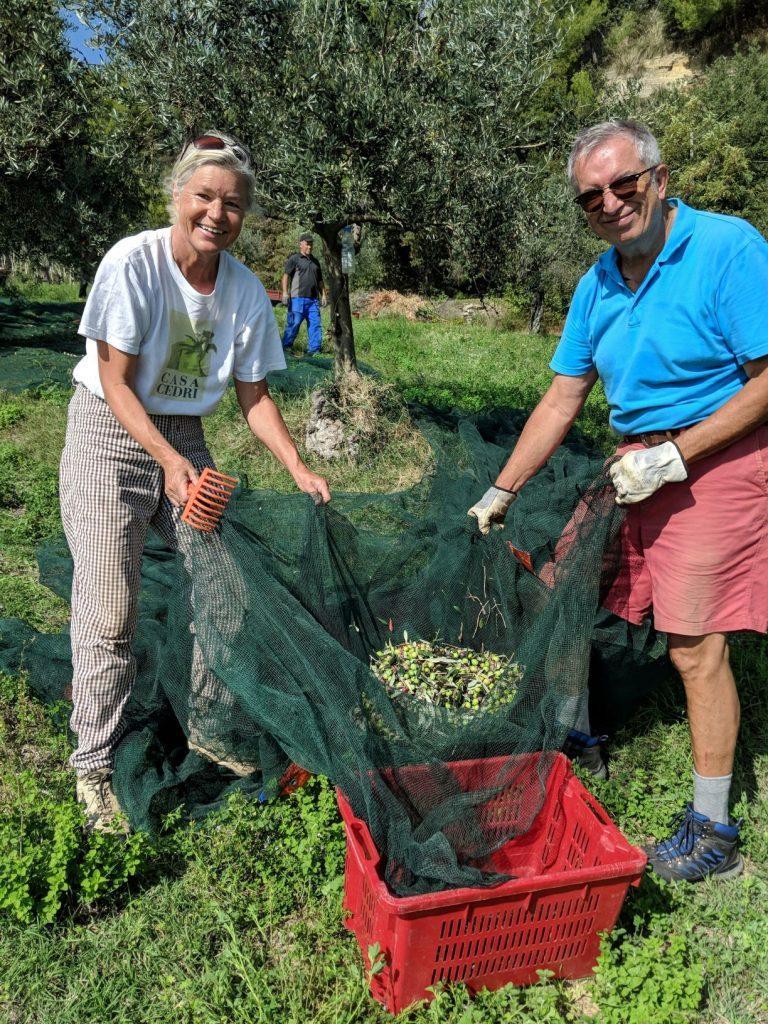 Michael und Heidi bei der spärlichen, aber sonnigen Olivenernte 2019